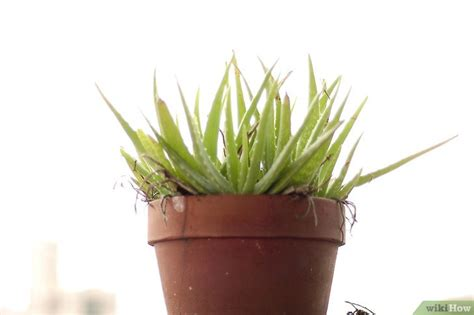 how to revive a dying plant how to revive a dying plant best free home design
