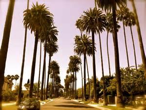 tree los angeles image gallery los angeles palm trees