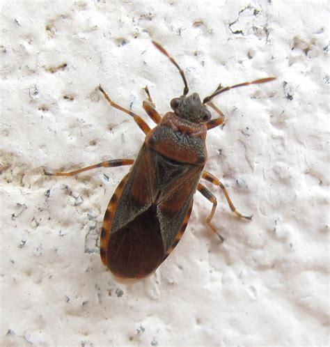 veleni mortali fatti in casa forum entomologi italiani leggi argomento grossi