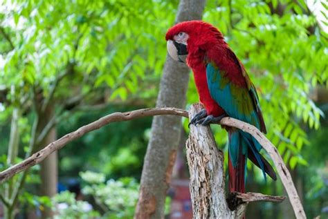 gorgeous macaw picture of st augustine alligator farm
