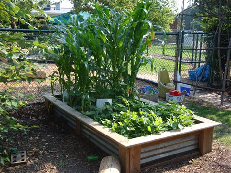 best way to make raised vegetable garden beds