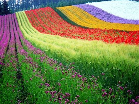 Orencia Also Search For Rainbow Fields Garden Flowers