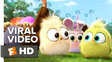 angry birds  viral video hatchling easter