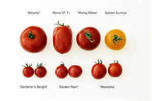 awesome Where To Keep Money Plant At Home #5: Our%20tomatoes%20grown%202012%20txt_1.jpg