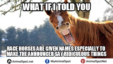 Gay Horse Meme - gay horse meme 28 images gay horse meme 28 images haha