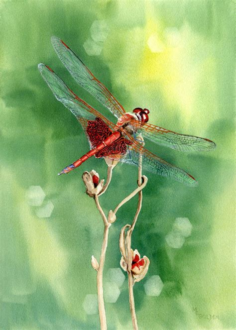 red dragonfly original watercolor the golden gallery
