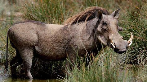 animals that start with a u inspec wallp animals animals that start with aw inspec wallp animals