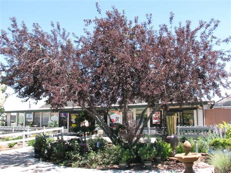 top 5 trees for a c and crime reduction mile high mamas