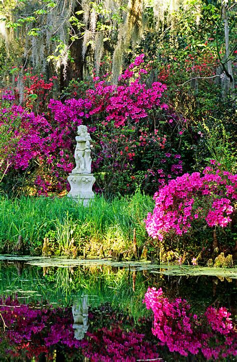 Magnolia Garden by Magnolia Gardens Near Charleston Sc Usa