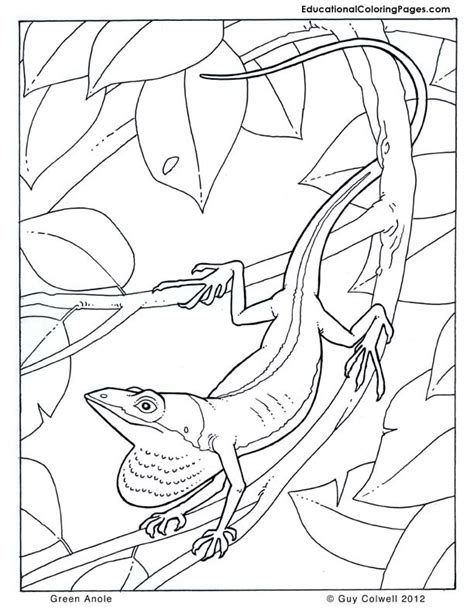 anole lizard coloring page in the trees book two 171 animal coloring pages for kids
