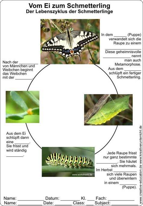 Lebenslauf Beispiel Mit Lucken Vom Ei Zum Schmetterling Lebenszyklus Der Schmetterlinge