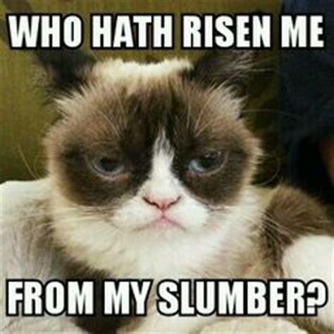 Sleepy Kitty Meme - my grumpy cat memes on pinterest grumpy cat grumpy cat