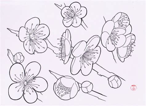 Easy To Draw Japanese Flowers by Flash By Laranj4 On Deviantart
