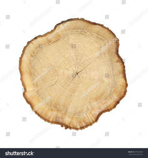 cross section cut cross section cut wood tree trunk stock photo 475526587