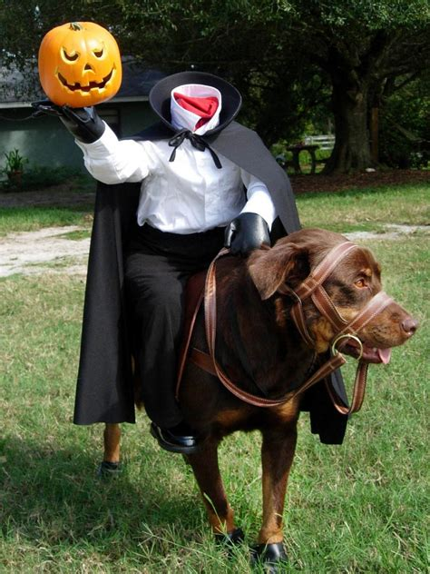 diy pet halloween costume ideas hgtvs decorating