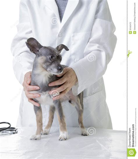 puppy check up pet at the vet for a check up stock photography image 31542472