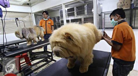 Kandang Kucing 50 Ribu penuhnya tempat penitipan hewan selama libur lebaran