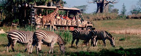 imagenes animal kingdom kilimanjaro safari