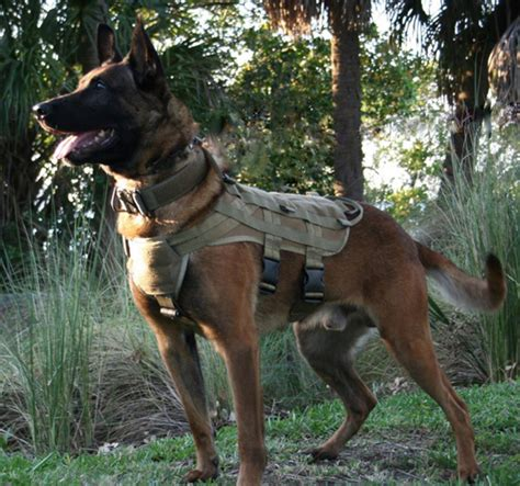 best house guard dogs best house dogs for protection 28 images what breed of makes the best survival the