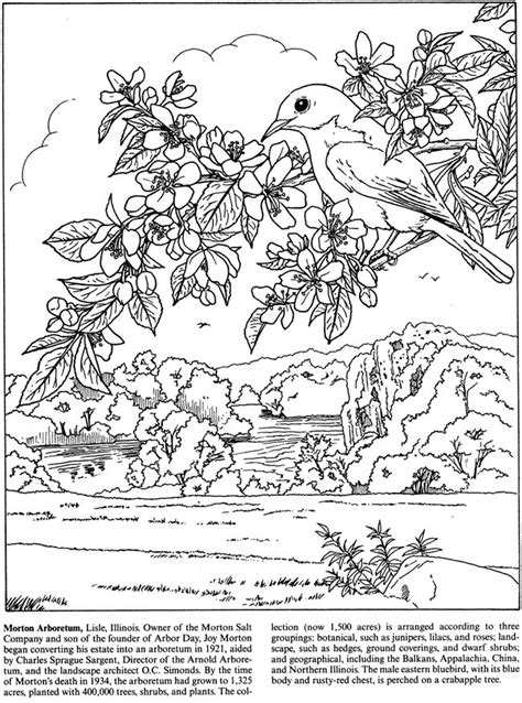 coloring book your photos welcome to dover publications