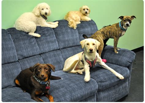 boarding rochester ny daycare boarding in rochester ny tails of success