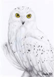 25 best owl drawings ideas on pinterest owl sketch