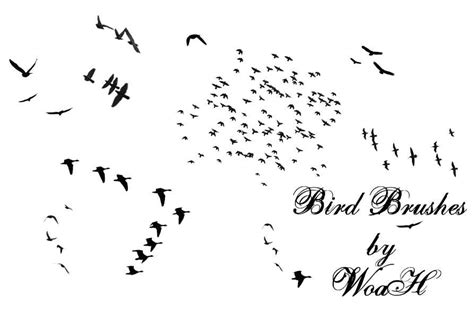 30 cool bird brush sets for photoshop