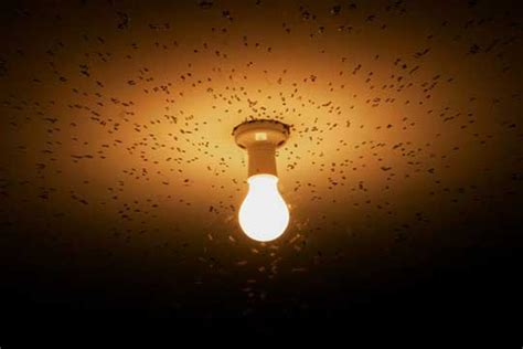 outdoor lights that don t attract bugs tip led lights don t attract bugs boston