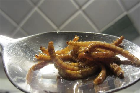 how to prepare and eat mealworms ground to ground