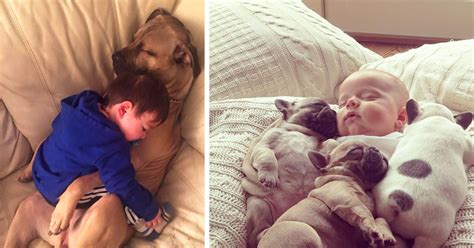 puppies cuddling dogs cuddling suggested post