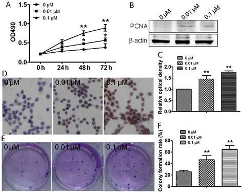 bcas2 promotes prostate cancer cells proliferation by atrazine promotes rm1 prostate cancer cell proliferation