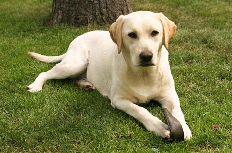 most popular breed of most popular breeds breeds picture