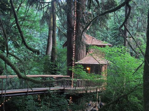 treehouse hotels in the northwest rogue minx - Treehouse In Seattle