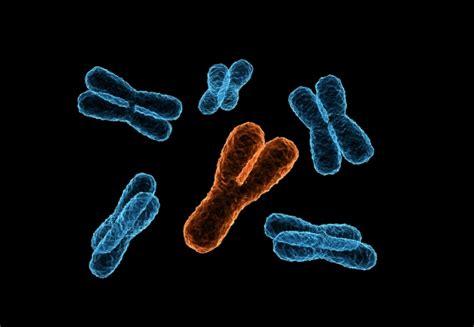 Reprieve for men: Y chromosome is not vanishing : Nature ... Y Chromosome