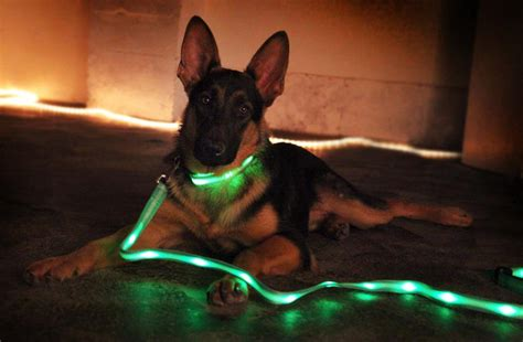 light up dog shoes led light up dog leash neverseenthis the unique