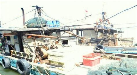 Puntius Tertra Zone Ikan Sumatera gunakan pukat harimau dua kapal ditangkap okezone news