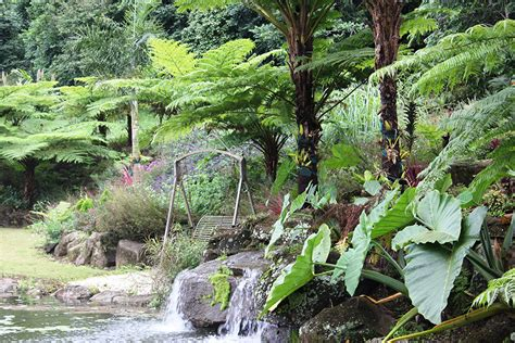 Maleny Botanic Gardens Maleny Botanical Gardens And Aviary Re Introduction To Colour And Coast