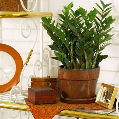 low light plants for bedroom 29 best fl elephant ears and large leaf plants images on