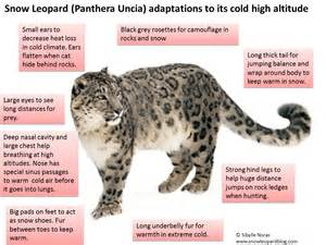 Adaptations related keywords amp suggestions leopards adaptations