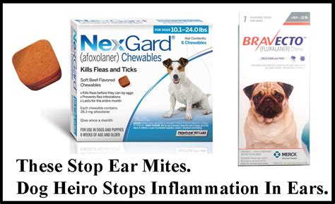 how to treat ear mites in dogs ear problems and skin problems how heiro helps both heiro for dogs