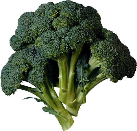 pictures of vegetables broccoli png image free broccoli pictures
