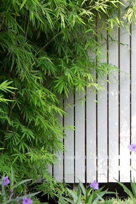 bambus richtig pflanzen 3849 bambus richtig pflanzen gartenbambus als sichtschutz