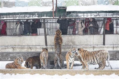 endangered  hunted  profit mykawarthacom