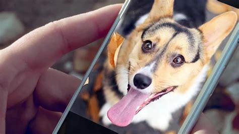puppy apps 10 best apps for android pyntax