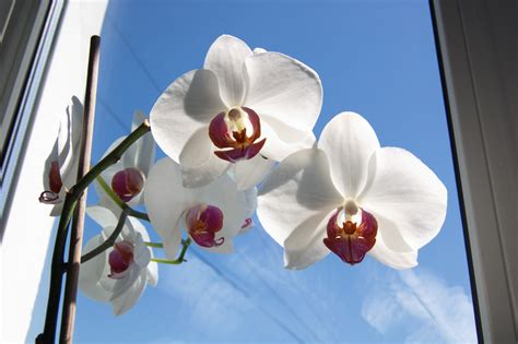 zimmerpflanzen die viel sonne vertragen orchideen und sonne 187 wieviel sonne vertragen sie