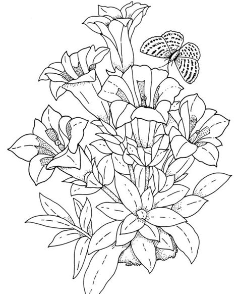 coloring pictures of realistic flowers realistic flowers coloring pages flower coloring pages