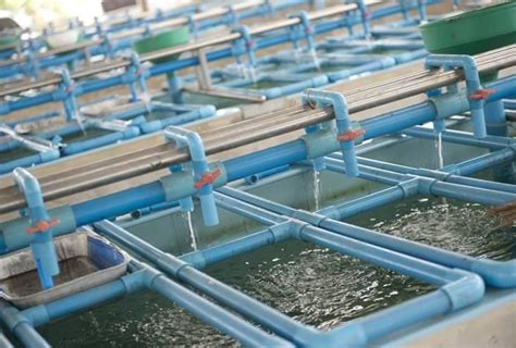 tilapia hatchery layout biosecurity in aquaculture part iii producers level