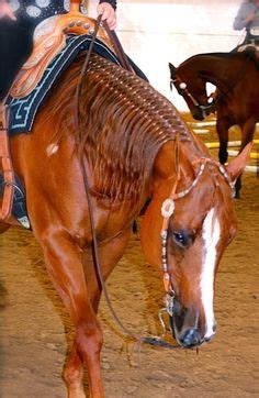 barrel racing horse hair braids horse info on pinterest