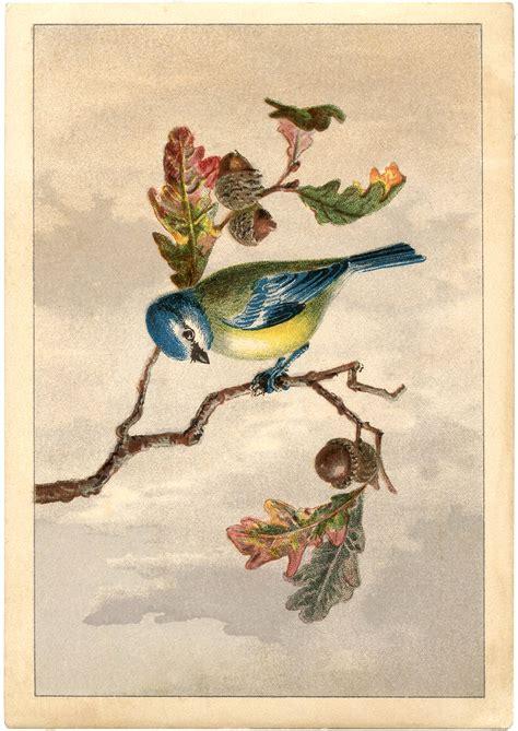 vintage images free free vintage bird clip marvelous the graphics