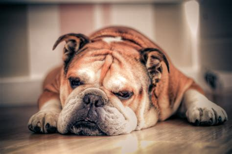 how often should puppies sleep 3 breeds and what they need pered